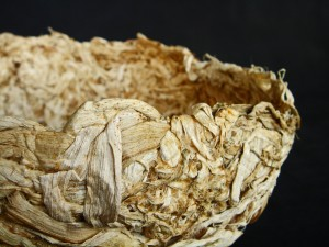 hyacinthaway06